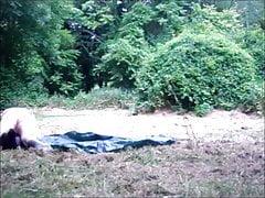Des mansanges dans les bois