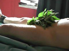 Torture de queue avec des orties