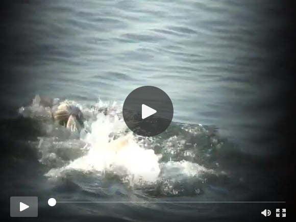beach voyeursexfilms of videos