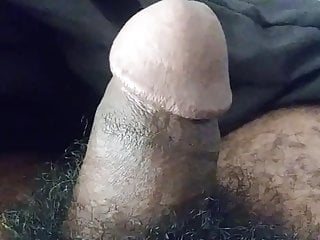 Cock doing morning exercise