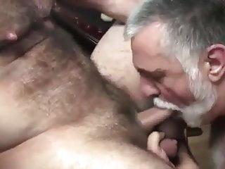 Bear sucking