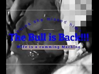 Bull is Again